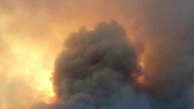 Photo of المدير العام للغابات: تسجيل 103 حريق عبر 17 ولاية