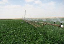 Photo of الشروع في تفريغ البطاطا المخزّنة في 14 ولاية